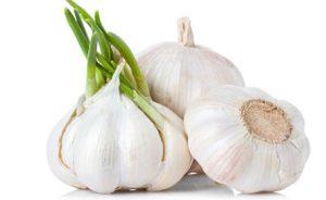 Garlic-exporter-supplier-3
