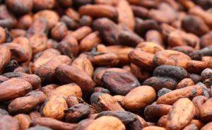 cocoa-bean-exporter-supplier-3
