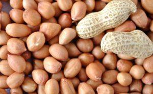peanut-exporter-supplier-2